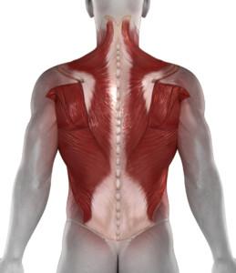 Dauerhaftes Sitzen ist eine Belastung für den Rücken, da durch die ständige Haltearbeit die die Rückenmuskulatur eine ständige Haltearbeit leisten muss.