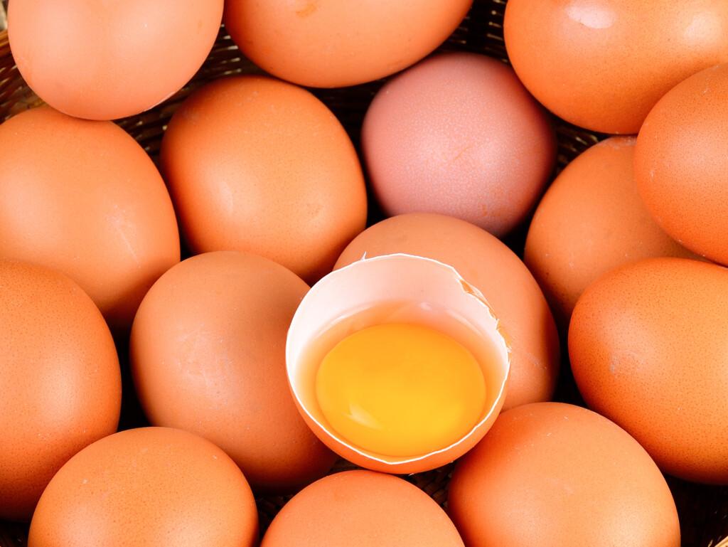 Salmonellengefahr Eier