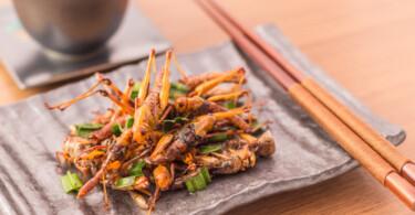 Insekten als Nahrungs-Alternative: Was die Zukunft bringt